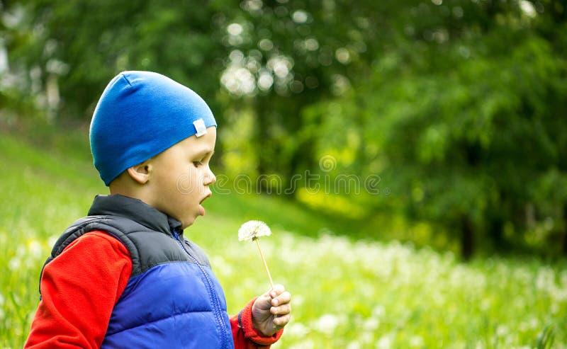 Kleine alte Spielen des Jungen 4 - 5 Jahre im Freien auf Hintergrund Junger Junge, der in Feld-durchbrennenlöwenzahn sitzt stockbilder