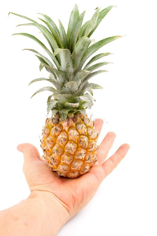 Kleine Ananas op hand royalty-vrije stock fotografie