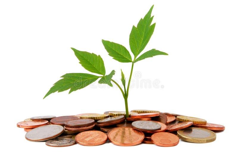 Kleine Anlage, die von den Münzen wächst lizenzfreie stockfotos