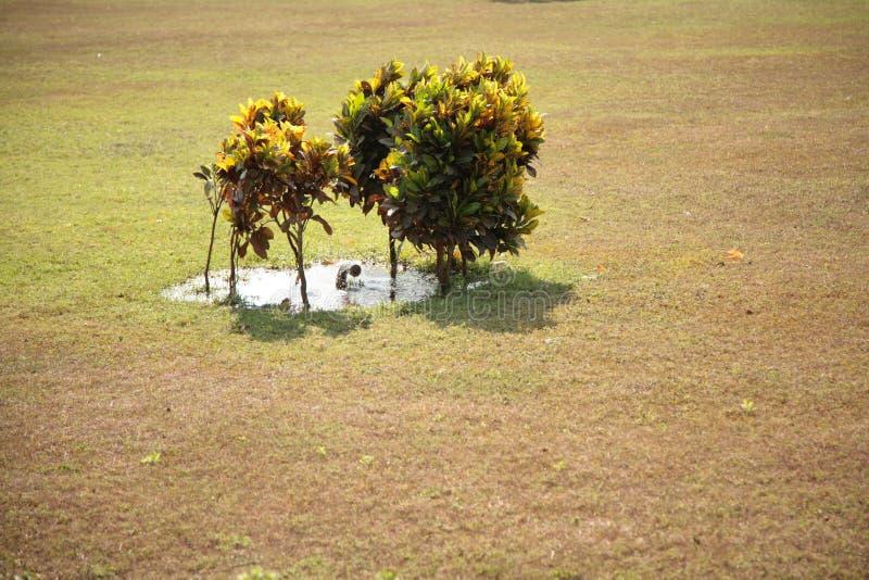 Kleine Bäume nahe der Quelle der künstlichen Bewässerung lizenzfreies stockfoto