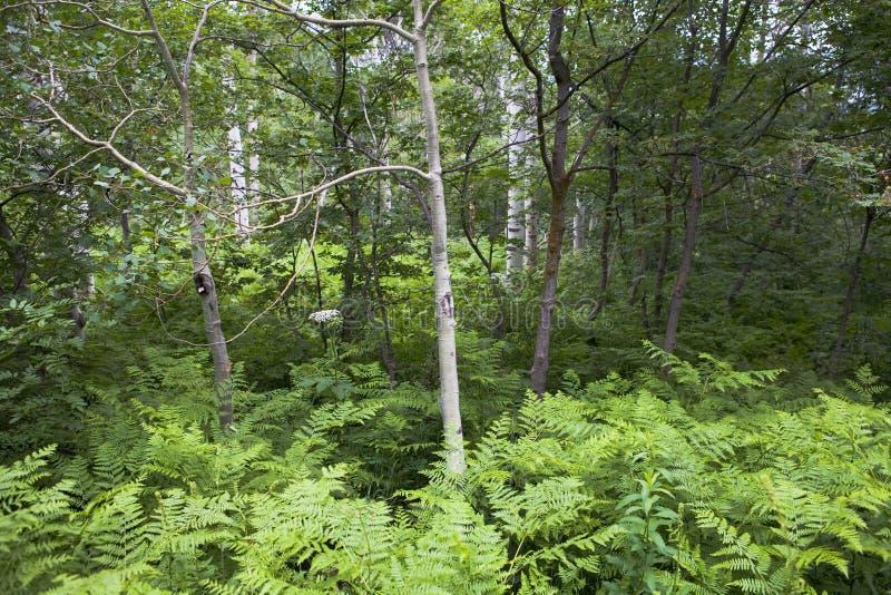 Kleine Bäume unter Anlagen stockfotos