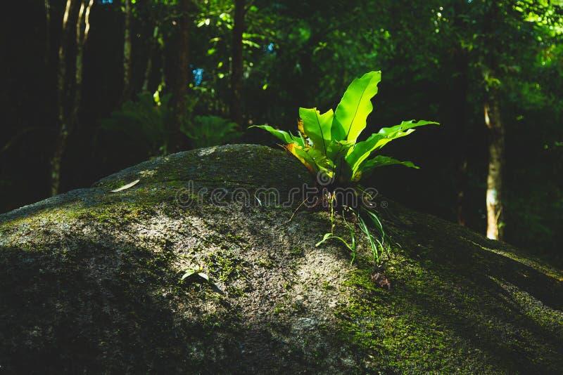 Kleine B?ume im Wald sind fruchtbar stockfoto