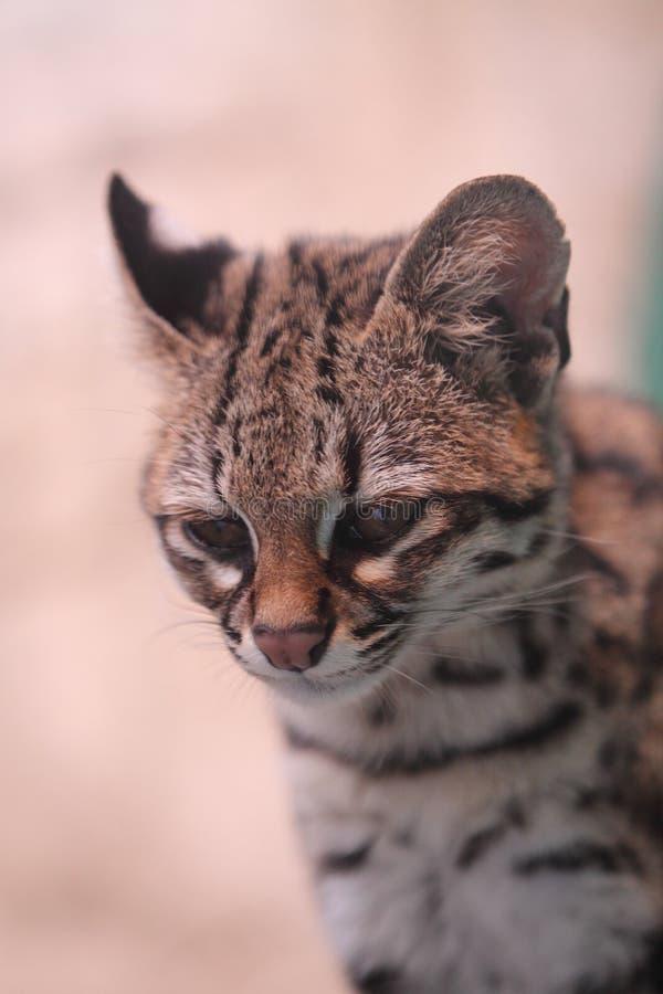 Kleine beschmutzte Katze lizenzfreie stockbilder