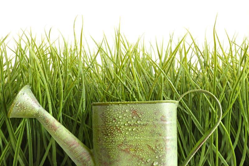 Kleine Bewässerungsdose mit hohem Gras gegen Weiß stockfotografie