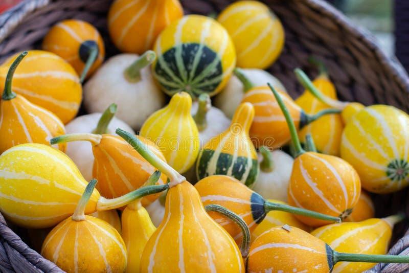 Kleine Bicolor pumpkins belong to the family Lagenaria siceraria. Pile of vegetables in a basket, harvest festival royalty free stock photos