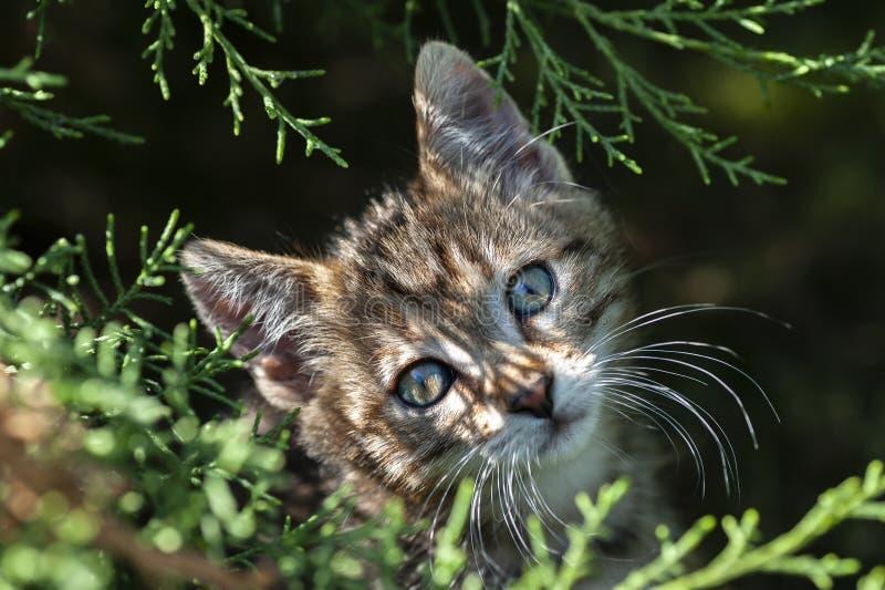 Kleine binnenlandse kat, spelen in de tuin royalty-vrije stock fotografie