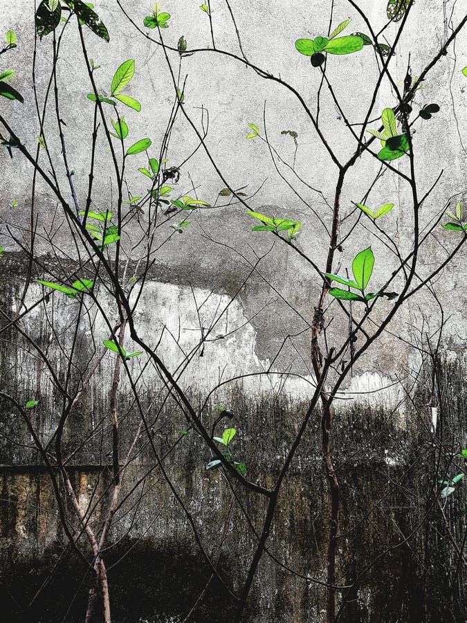 Kleine bladeren van een installatie op saaie achtergrond stock afbeeldingen
