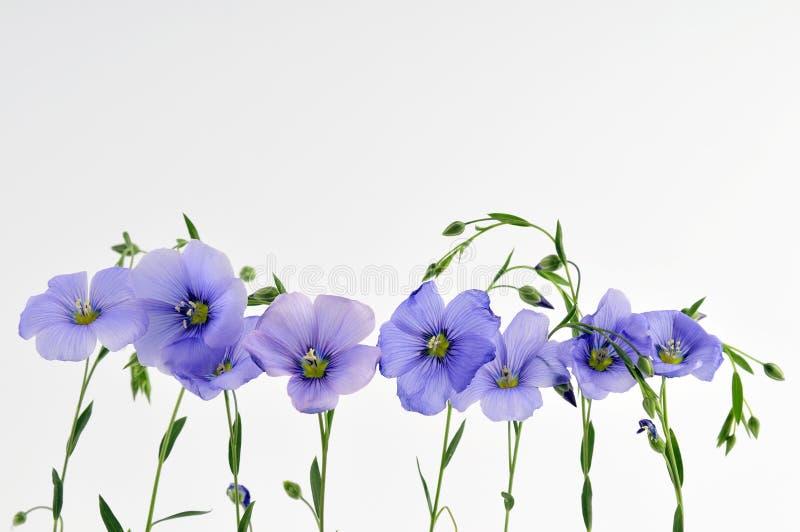 kleine blaue blumen stockbild bild von wei blumenblatt 5158491. Black Bedroom Furniture Sets. Home Design Ideas