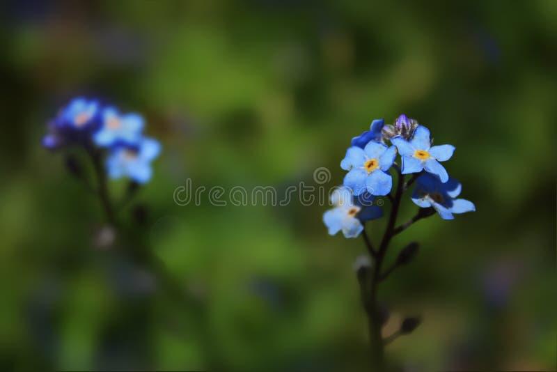 Kleine blaue Blumen stockbilder
