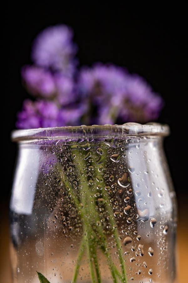 Kleine blaue Blumen in einem Glasvase Schöne kleine Blumen mit einem Wassertropfen stockfotos