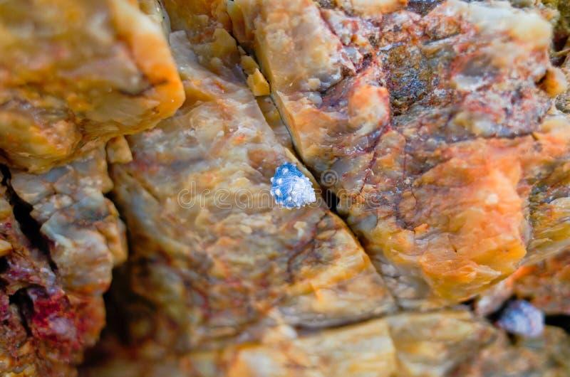 Kleine blaue Muscheln, die gegen Felsen auf Strand sich anschmiegen stockbilder
