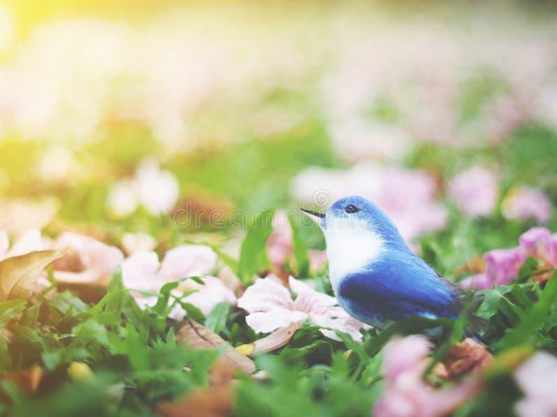 Kleine blauwe en witte vogel op grasgrond met roze bloemendaling stock afbeelding