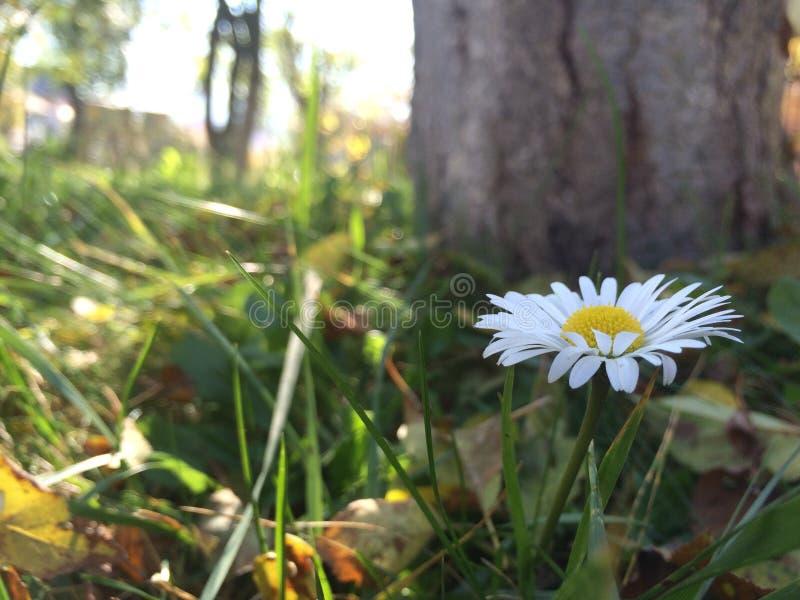 Kleine bloem royalty-vrije stock afbeeldingen