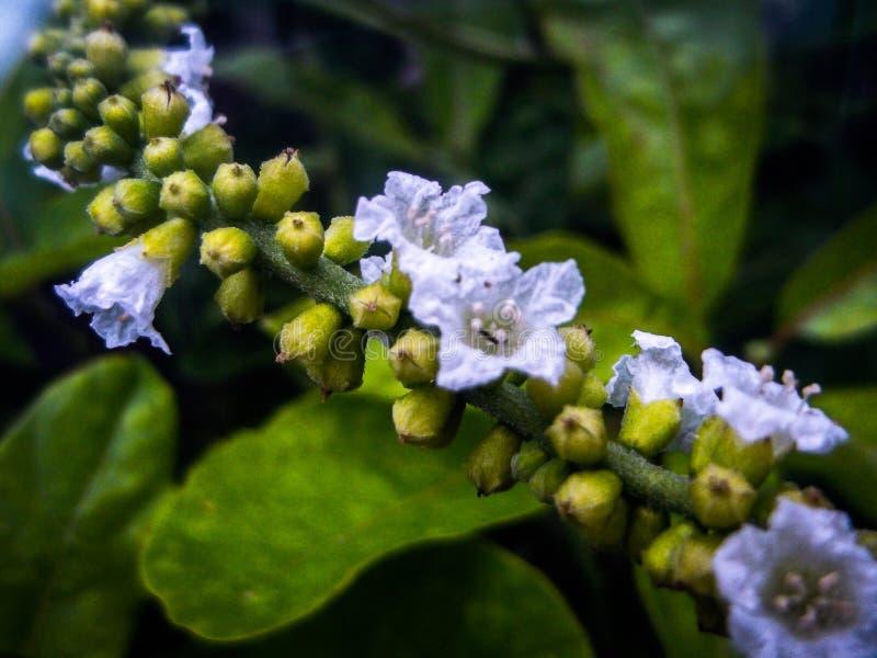 Kleine bloem blauwe tint stock foto