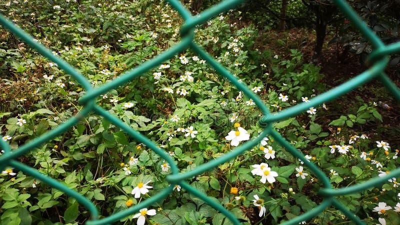 Kleine bloem bloeit onder zonlicht, zuivere witte blaadjes en gele pistil op groene bladeren stock foto