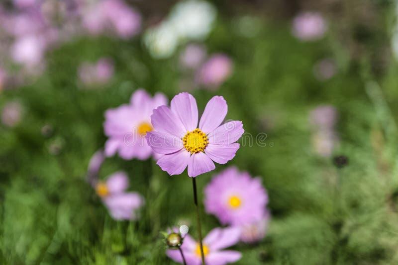 Kleine bloem in een tuin stock foto's