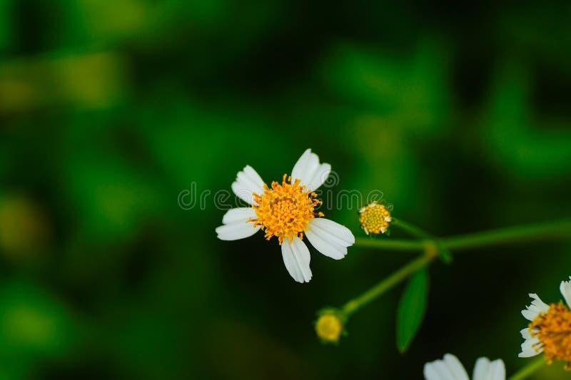Kleine Bloem in Macrofotografie stock foto's