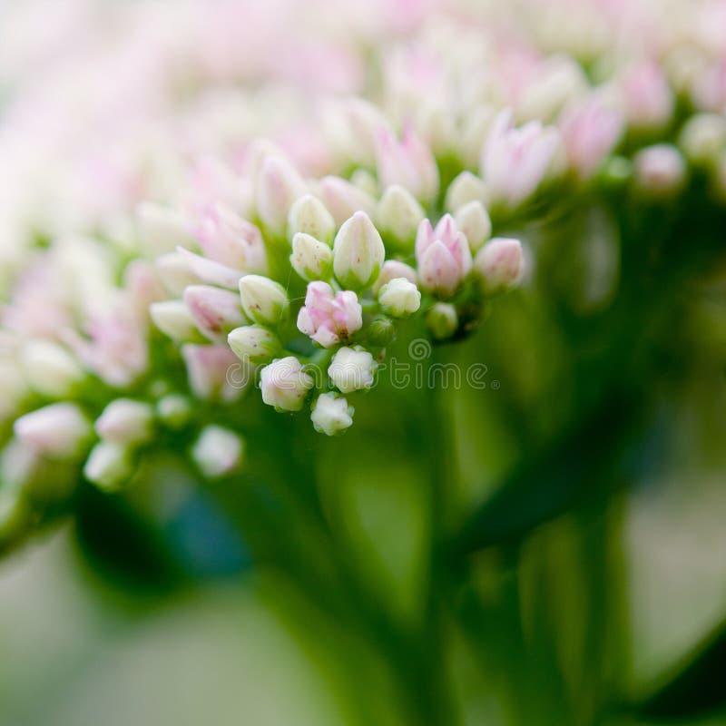 Kleine bloemen royalty-vrije stock foto