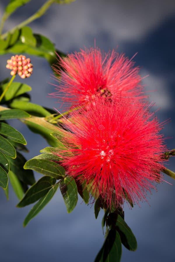 Kleine bloemen stock afbeeldingen