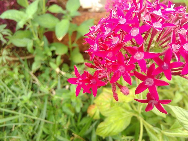 Kleine Blumen stockbild