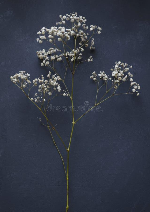 kleine Blumen auf dunklem Hintergrund stockbild