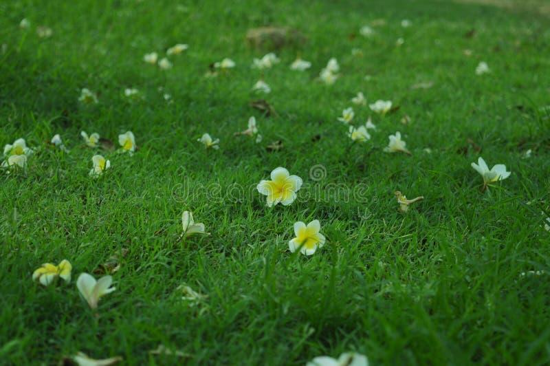 Kleine Blumen auf Gras-Hintergrund stockbild