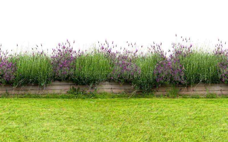 Kleine Blumenhecke lokalisiert auf Weiß Nahtloses endloses Muster lizenzfreie stockfotografie