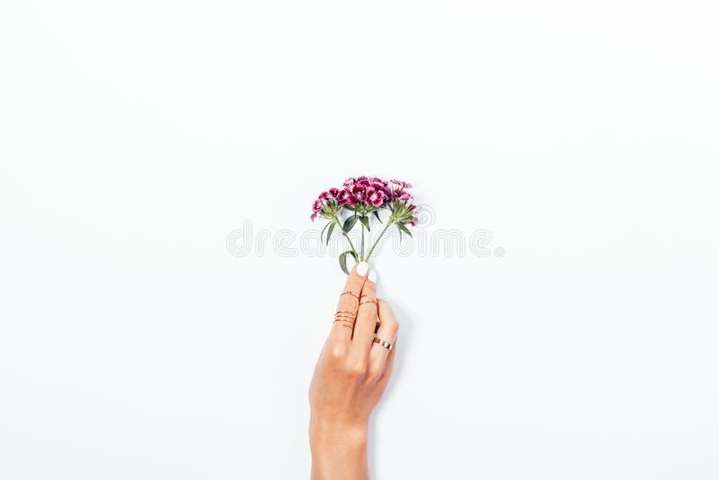 Kleine Blumenniederlassung in der Hand der Frau mit weißer Maniküre lizenzfreie stockfotos