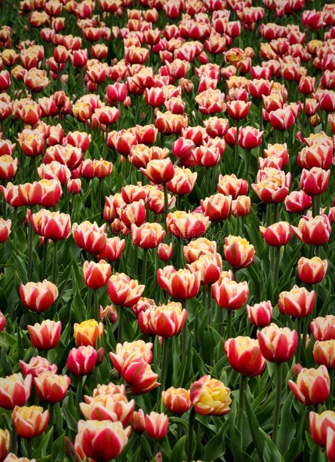 Kleine Blumensträuße mit Bögen lizenzfreie stockfotos