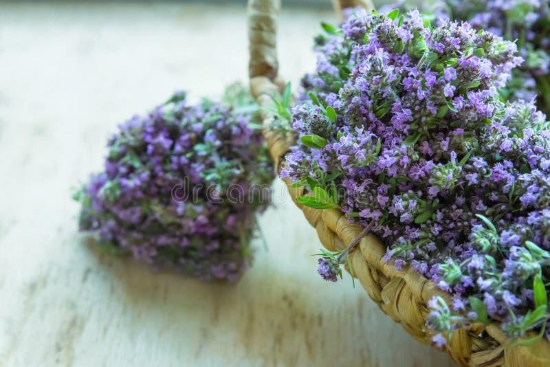 Kleine Boekettenbundels van Gebonden Bloeiende Verse Thyme met Blauwe Bloemen in Rieten Mand op Houten Lijst Landelijke Moestuin royalty-vrije stock afbeelding