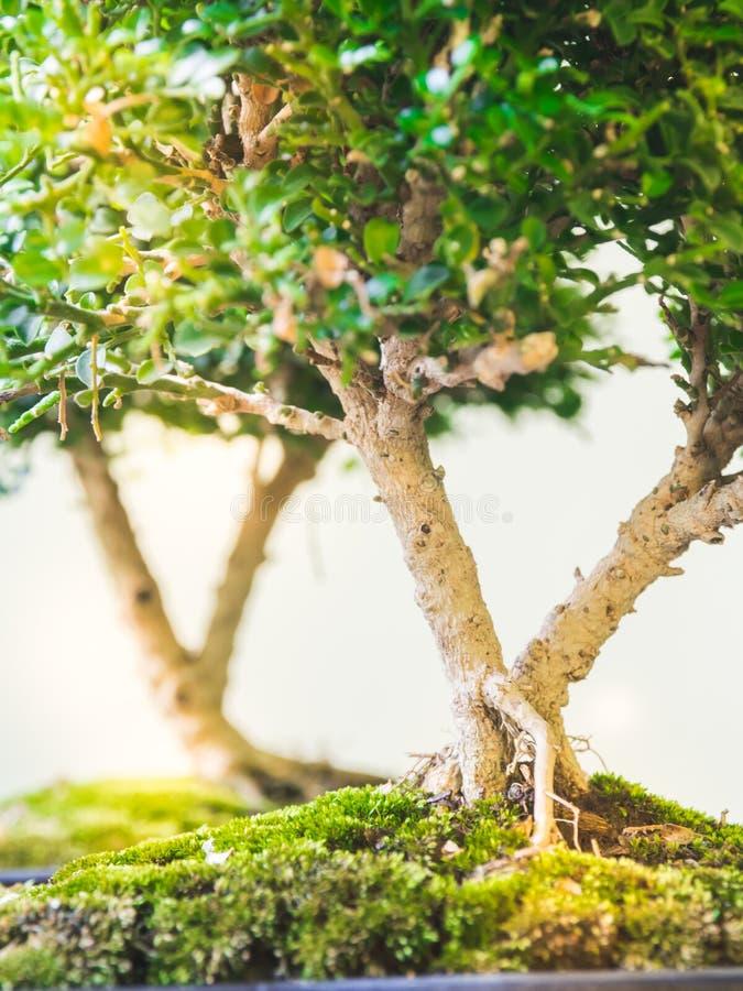 Kleine bomen stock afbeelding