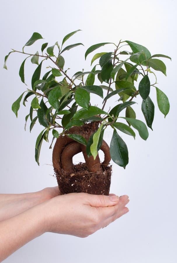 Kleine boom in een hand royalty-vrije stock afbeeldingen