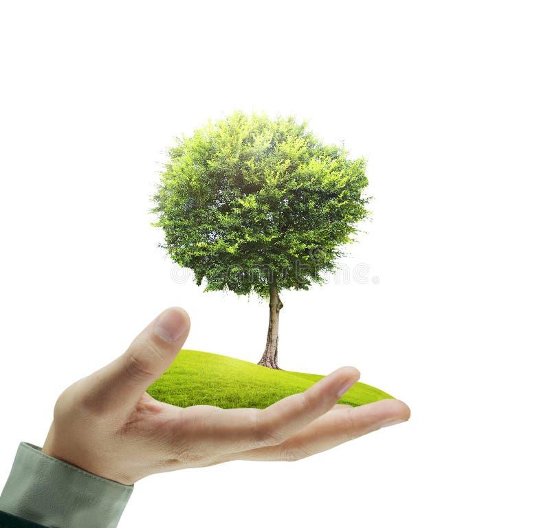Kleine boom in een hand stock afbeeldingen