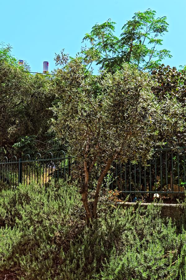 Kleine boom in een openbare tuin stock fotografie