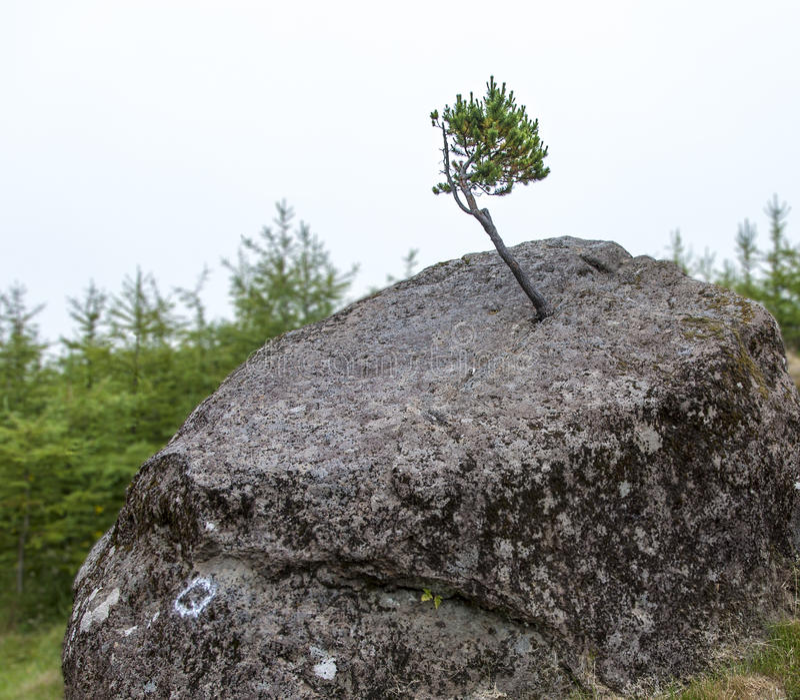 Kleine boom en grote rots stock foto's