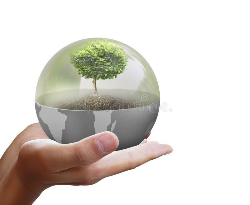 Kleine boom in hand zakenman stock foto's