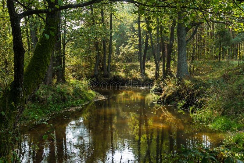 Kleine bosrivier Daling royalty-vrije stock fotografie