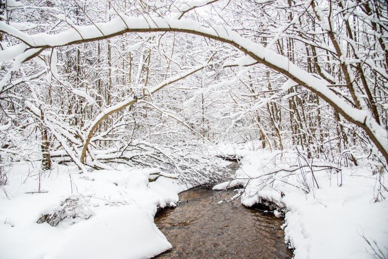 kleine bosstroom in de winter royalty-vrije stock foto's