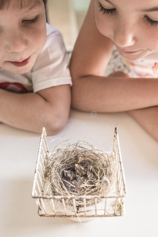 Kleine broers die nest met twee kuikens van distelvink waarnemen stock foto's
