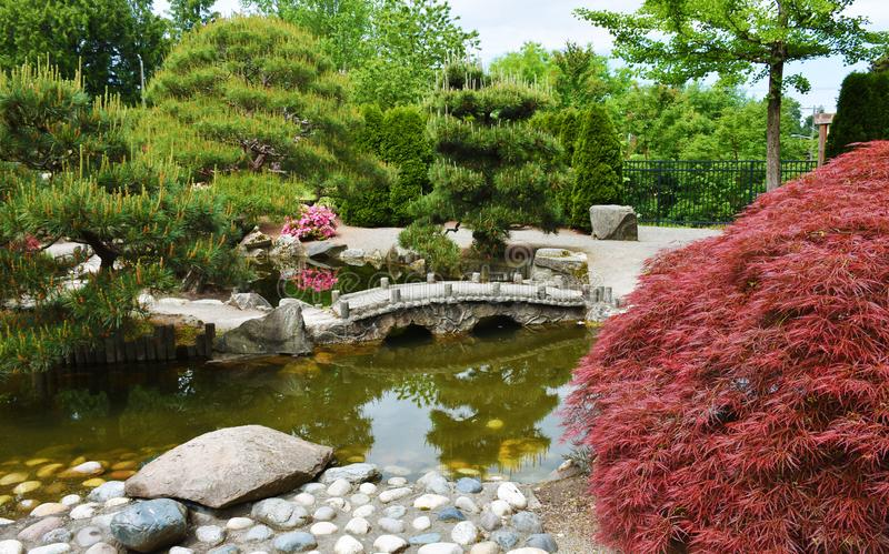 Kleine brug in botanische tuin stock foto