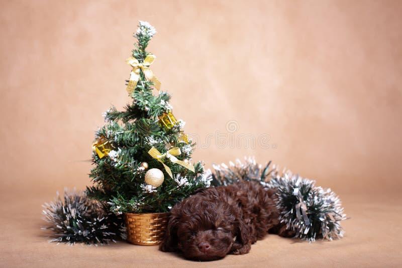 Kleine bruine puppy met kerstboom royalty-vrije stock foto's