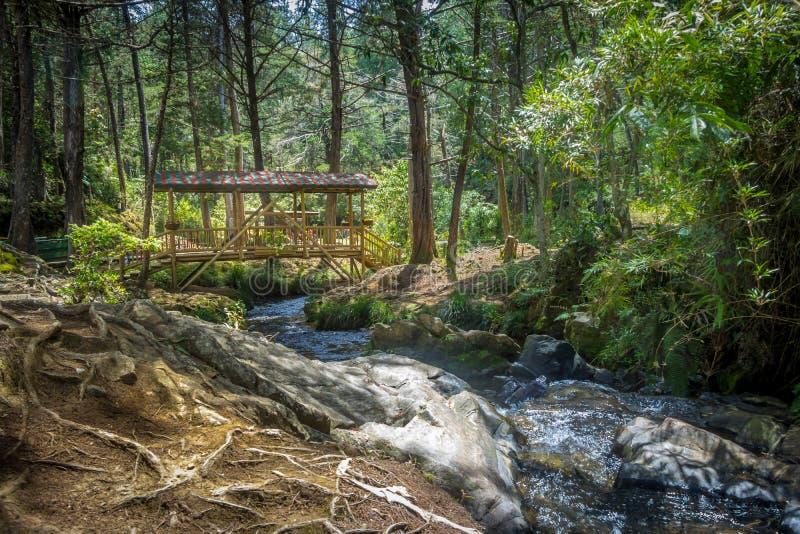 Kleine bunte bedeckte Holzbrücke - Parque Arvi, Medellin, Kolumbien stockbilder