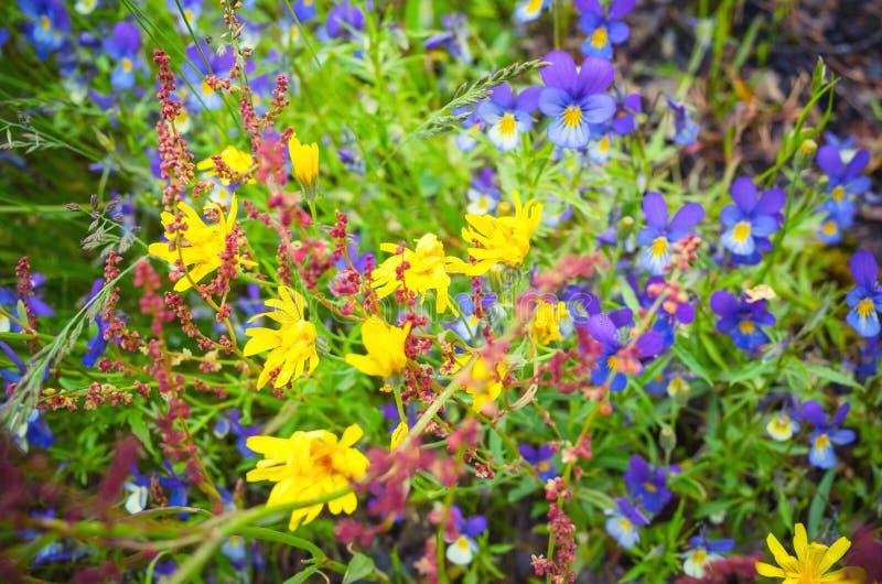 Kleine bunte wilde Blumen im Wald lizenzfreies stockbild