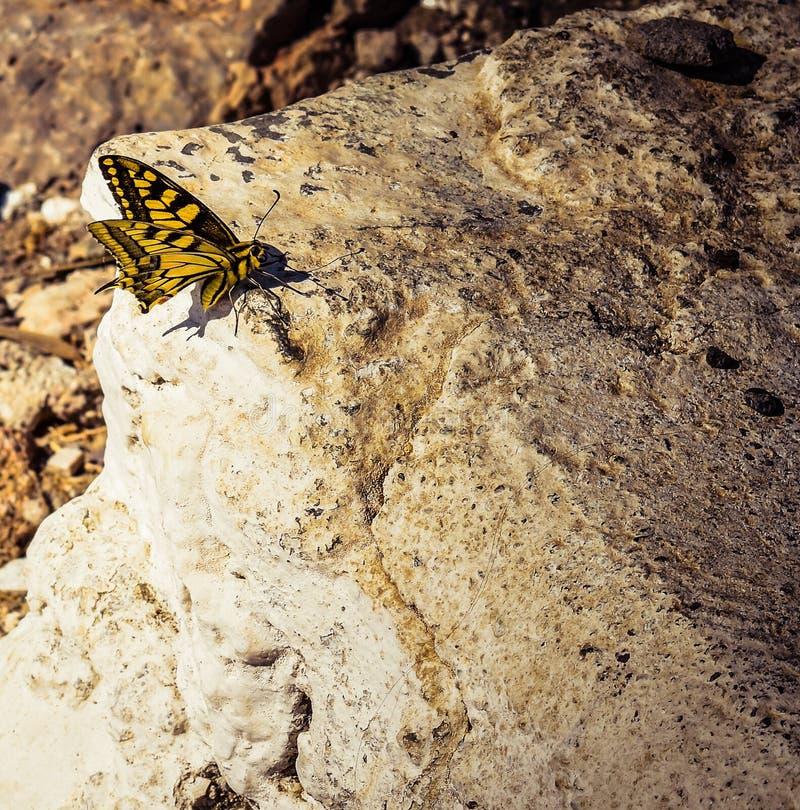 kleine buttelfy rust haar vleugels royalty-vrije stock afbeelding