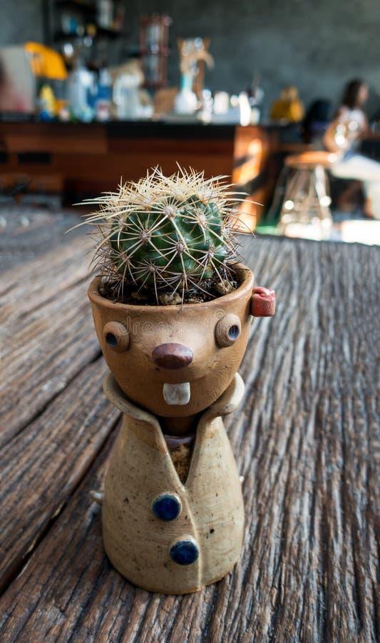 Kleine cactus stock afbeeldingen