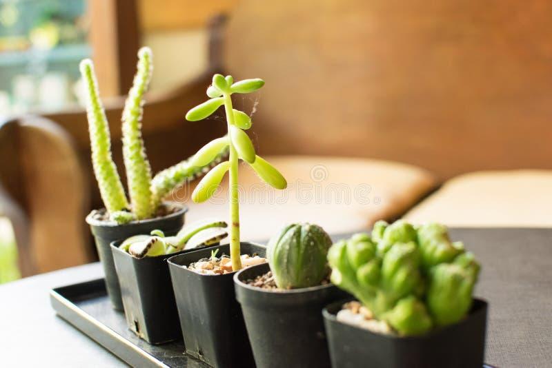 Kleine Cactus en de Kleine Decoratie van het Sierplanthuis stock foto's