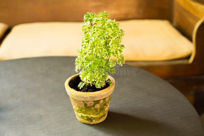 Kleine Cactus en de Kleine Decoratie van het Sierplanthuis royalty-vrije stock foto