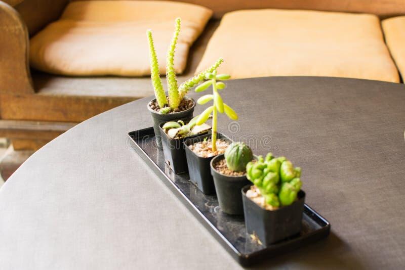Kleine Cactus en de Kleine Decoratie van het Sierplanthuis stock afbeeldingen