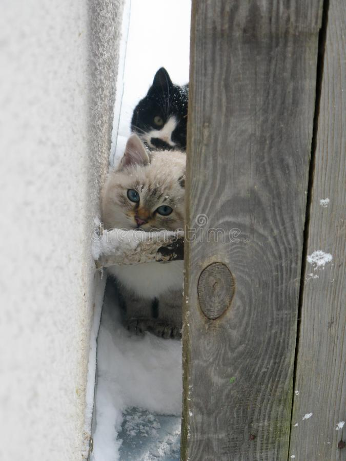 Kleine dakloze pluizige katjes, wit en zwarte royalty-vrije stock foto's