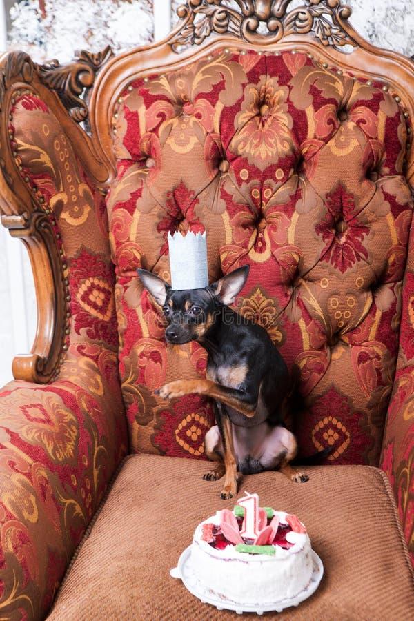 Kleine de partijviering van de huisdierenverjaardag stock fotografie
